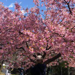 もうすぐ春^_^